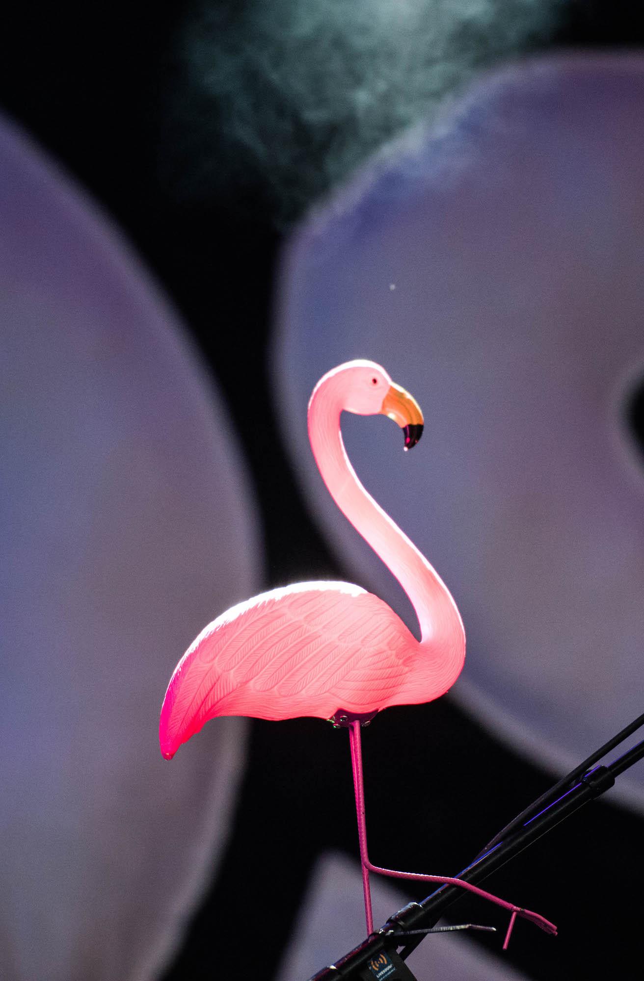 Flamingo auf der Bühne von Josh